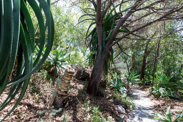 Ejemplo de jardín tropical, extra grande, en patio trasero, con exposición total al sol y adoquines de piedra natural