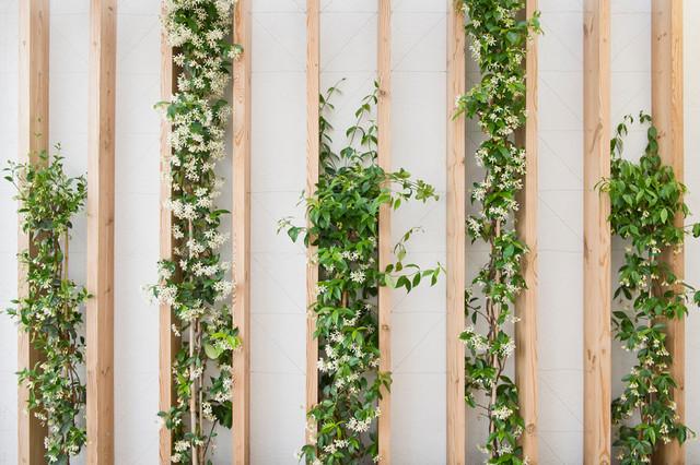 ces plantes d 39 int rieur originales grimpent sur les murs. Black Bedroom Furniture Sets. Home Design Ideas