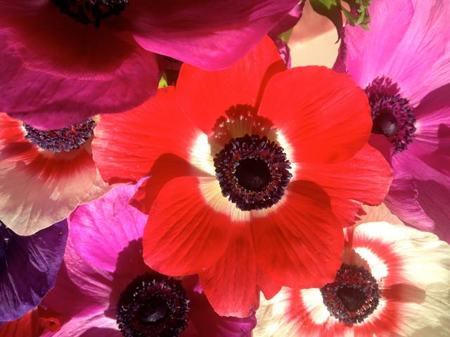 8 vari t s color es qui fleurissent en hiver - Fleurs qui fleurissent en hiver ...