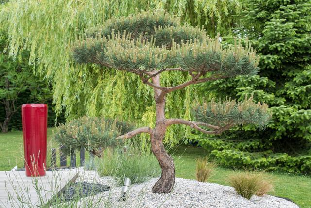 Visite priv e un jardin zen aux influences japonaises for Le jardin zen lagnieu