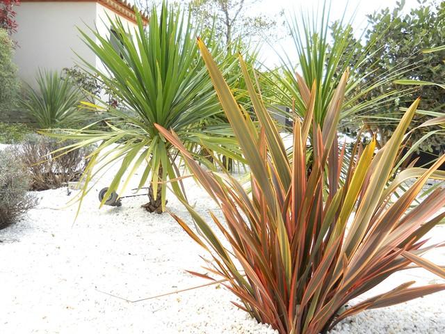 Entretien jardin et massifs m diterran en jardin montpellier par angle vert services - Jardin pente rocaille montpellier ...