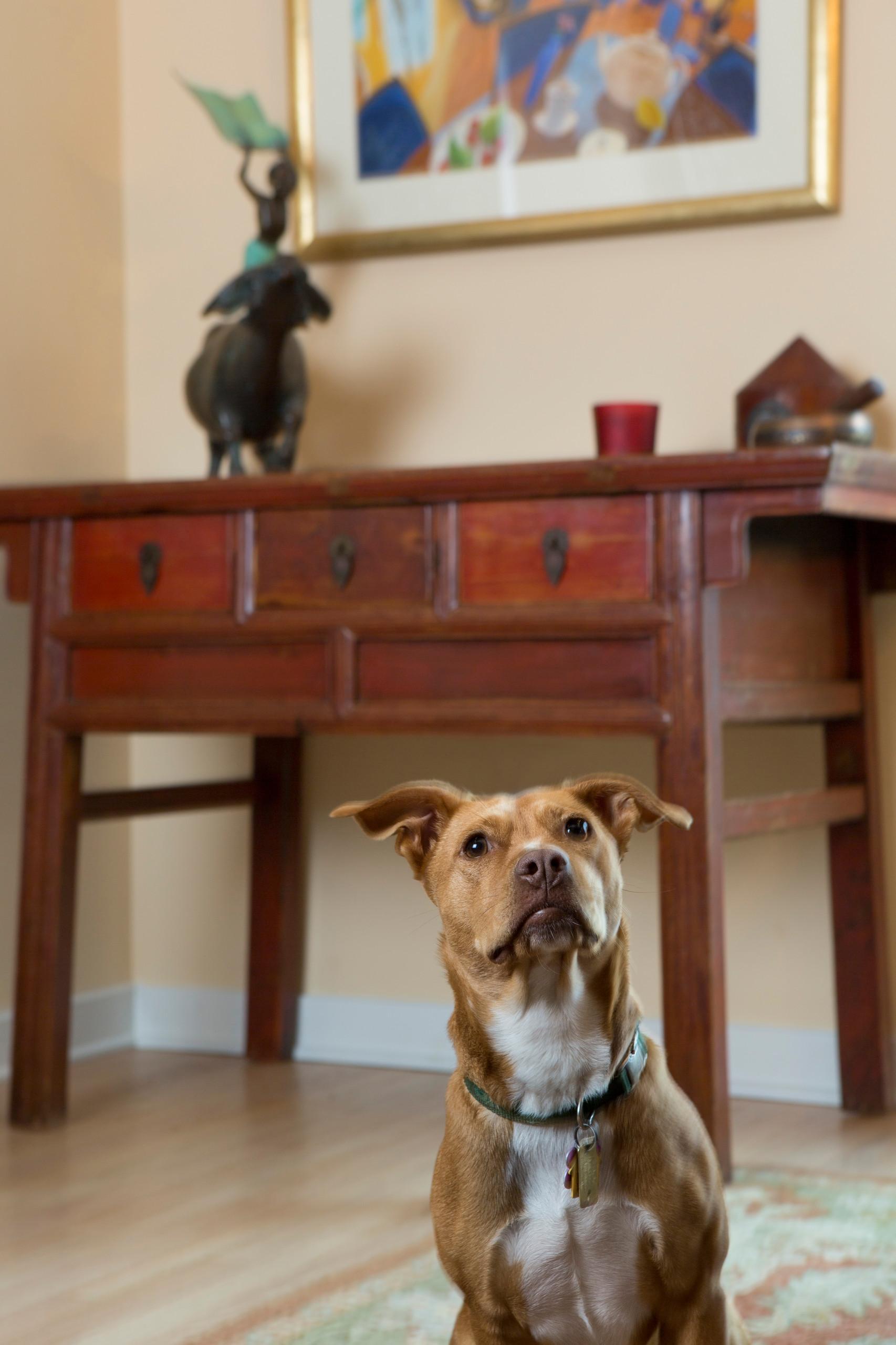 Antique Side Board & Pup