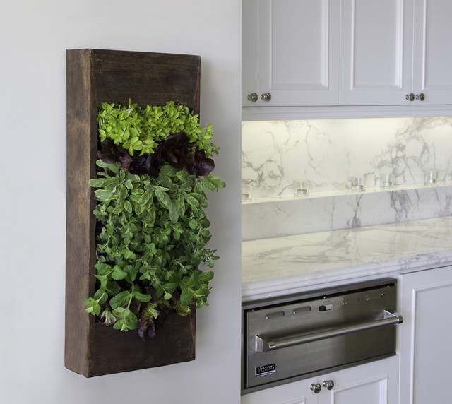 Kitchen Herbs   Contemporary   Kitchen   Los Angeles   By ...