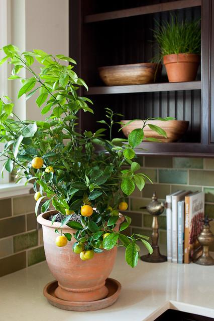 Natural Modern contemporary-kitchen