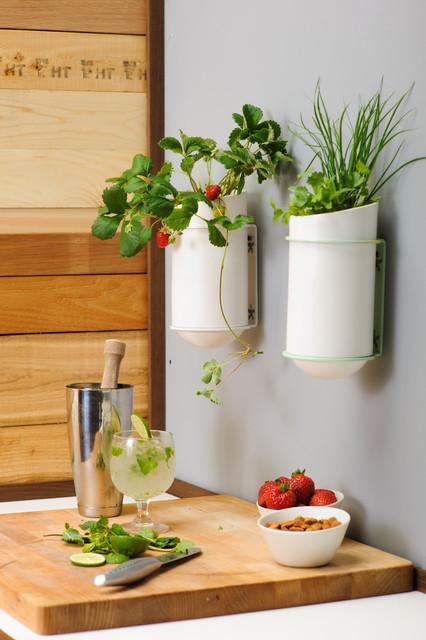 The Bloomer series - Hanging Gardens