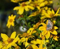 A Beginner's Guide to a Beautiful Butterfly Garden