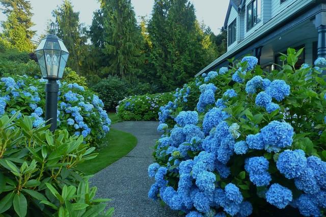 A blue garden - Traditional - Garden - Vancouver