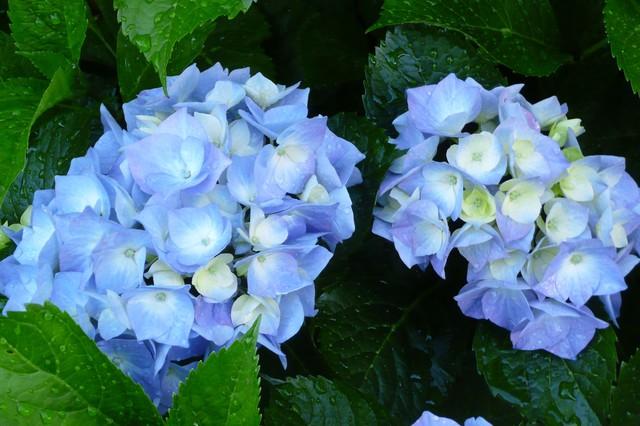 A blue garden traditional-landscape