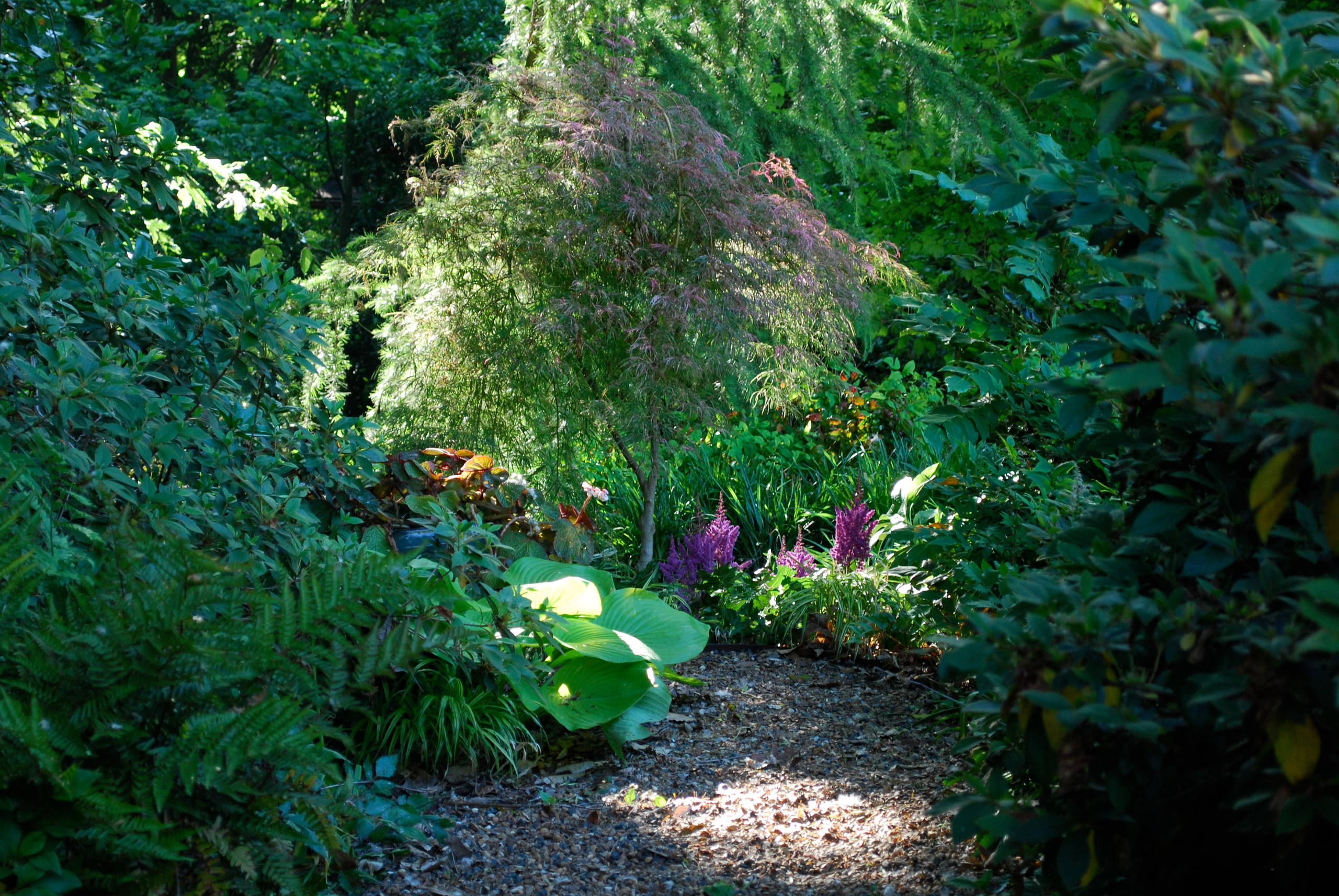 A garden can be a magical place.