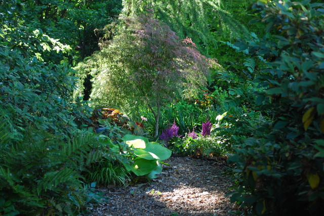 A garden can be a magical place. traditional-landscape