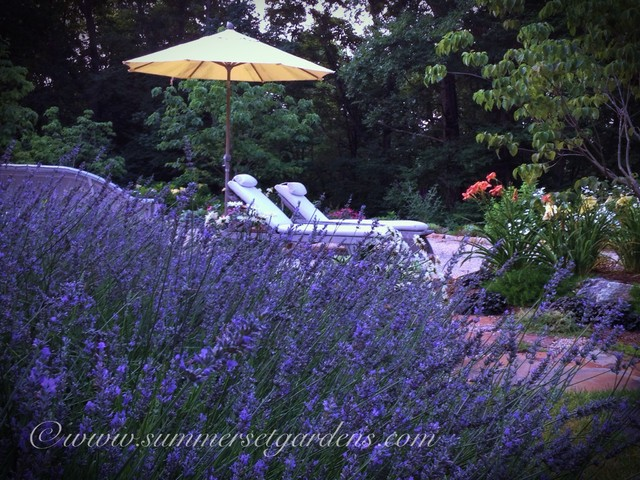 A Little Bit of Provence in Westchester NY traditional-landscape