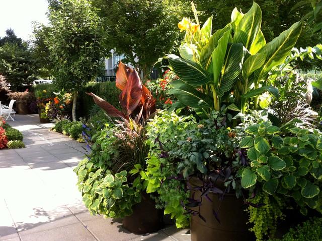 A Modern Tropical Garden 2012 Tropical Landscape