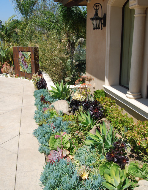 A succulent wall contemporary landscape los angeles for Garden design with succulents