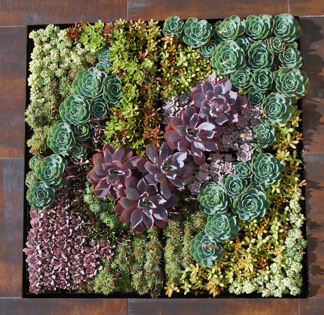 A Succulent Wall Industrial Landscape Los Angeles