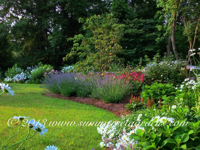 A Summer Blooming Perennial Garden Traditional