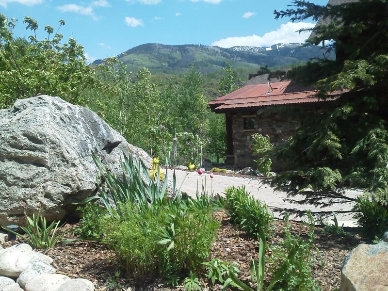 A xeric garden