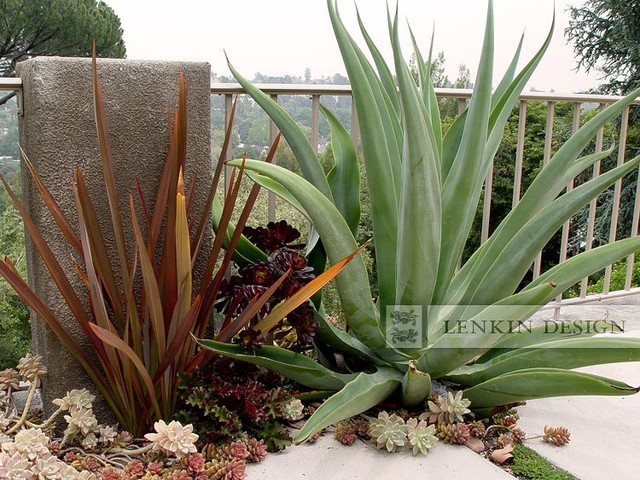 Agave And Succulent Garden - Modern - Garden - Los Angeles - By
