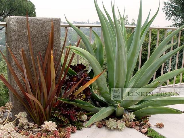 Agave and Succulent Garden Modern Landscape Los