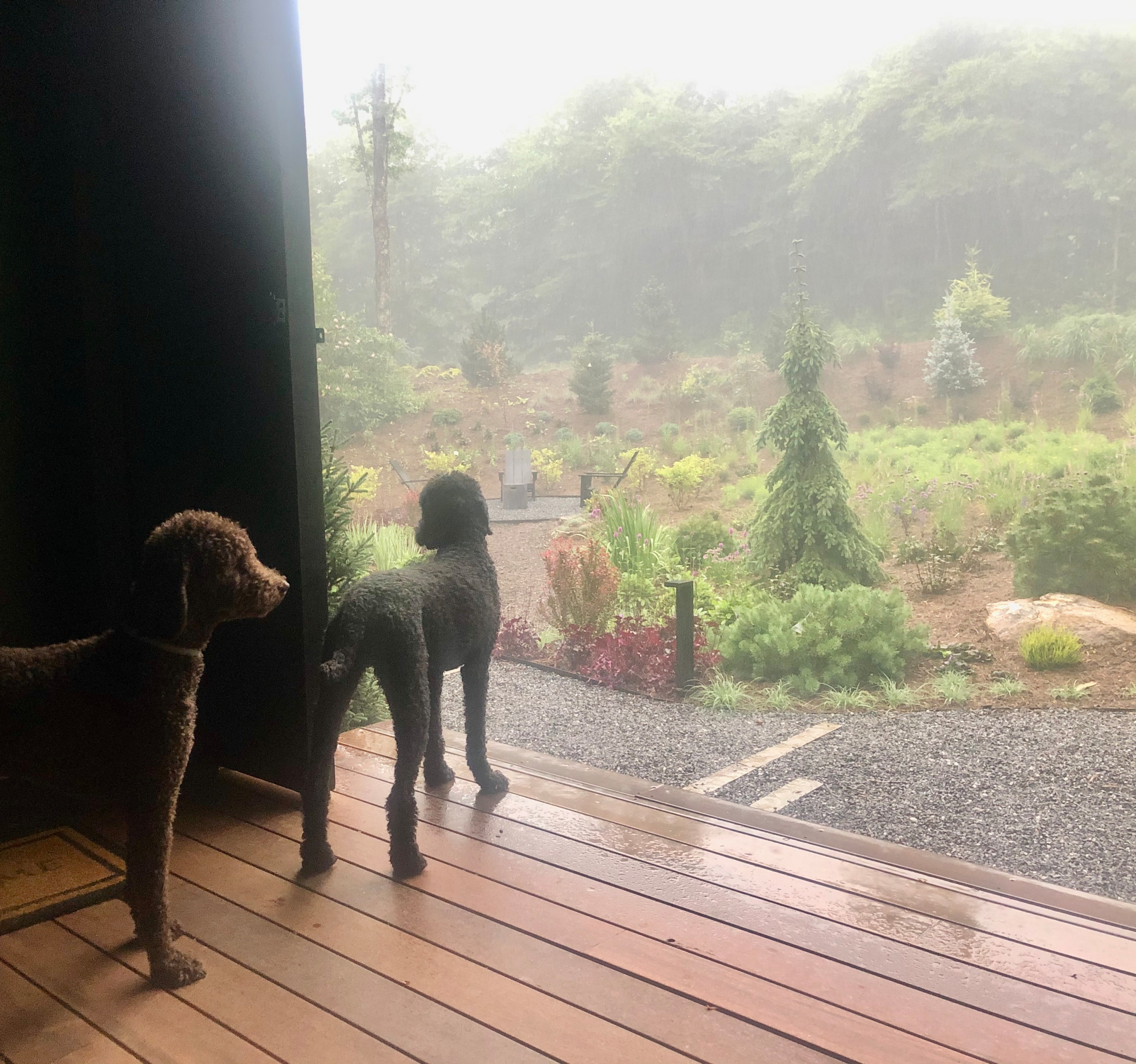 Amador and Sonoma watching the storm.