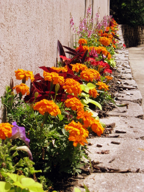 Annuals and Containers landscape