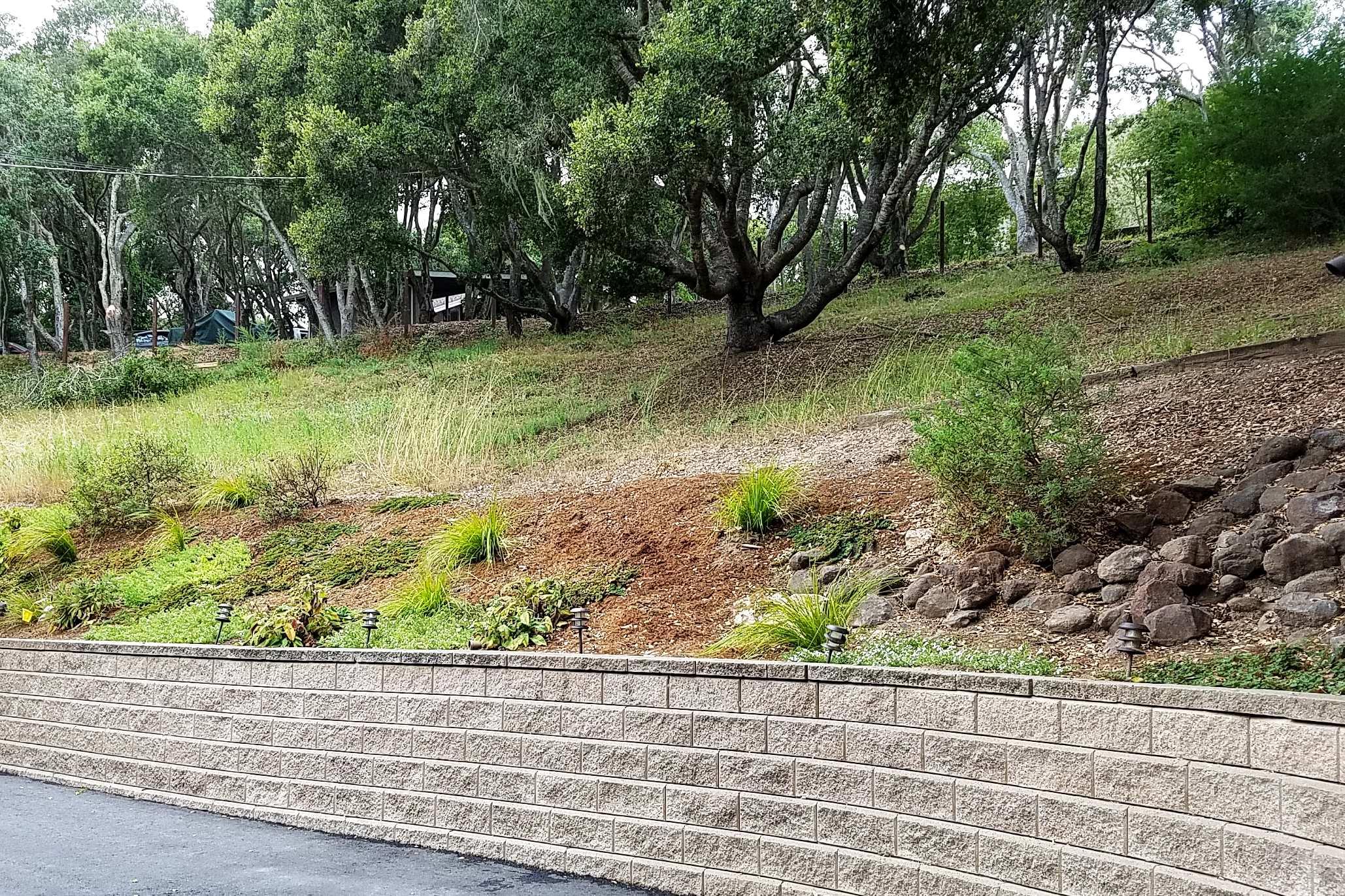 Aptos Hills Deer-Resistant and Drought-Tolerant