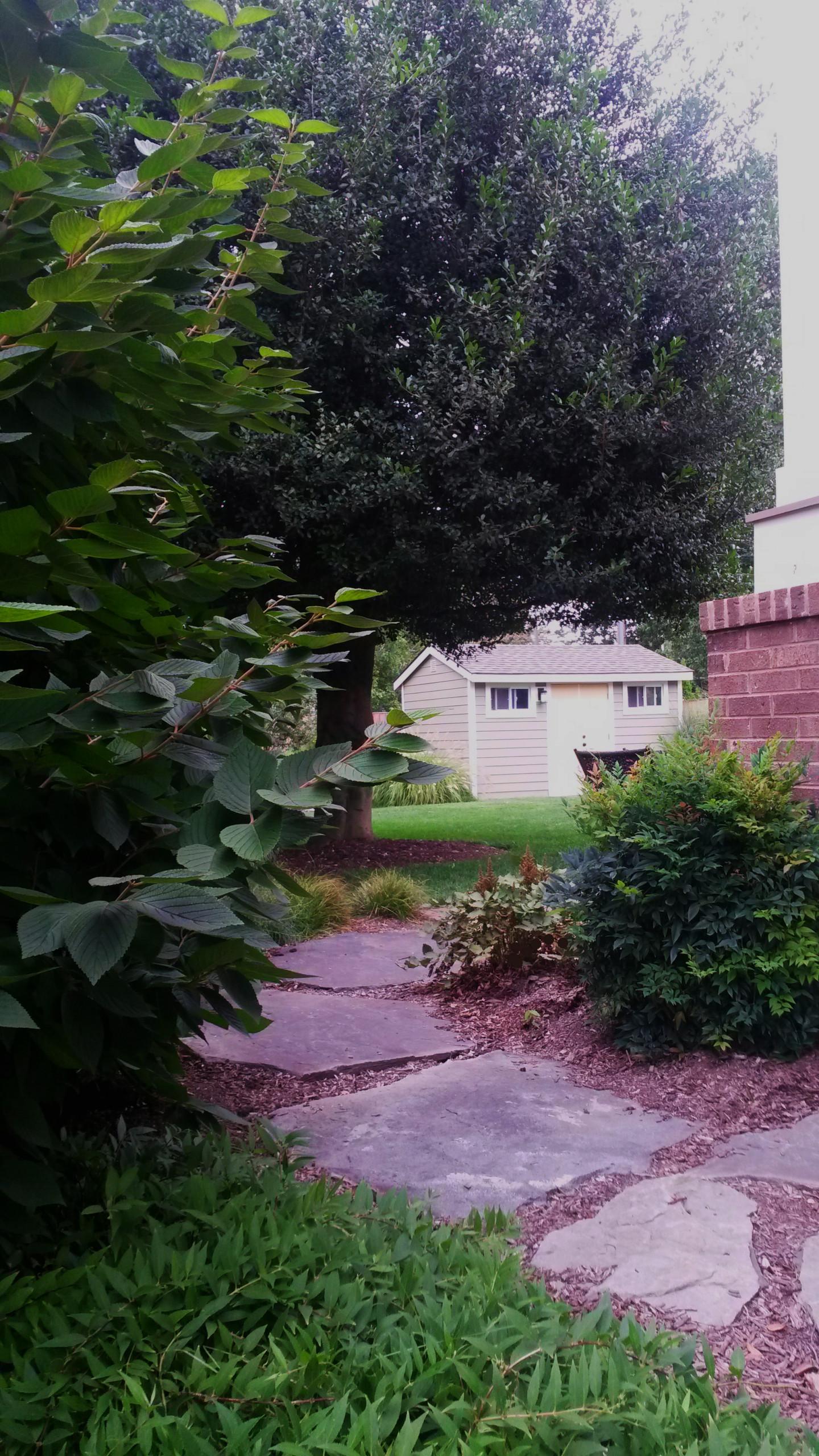Arlington Back yard