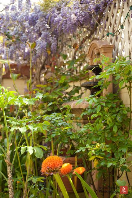 Armacost Garden mediterranean-landscape