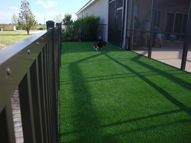 Artificial Grass Backyard Dog : Artificial Grass for Dog Areas  Contemporary  Landscape  tampa  by