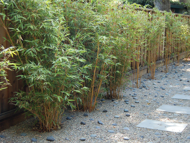 Great Design Plant Alphonse Karr Bamboo