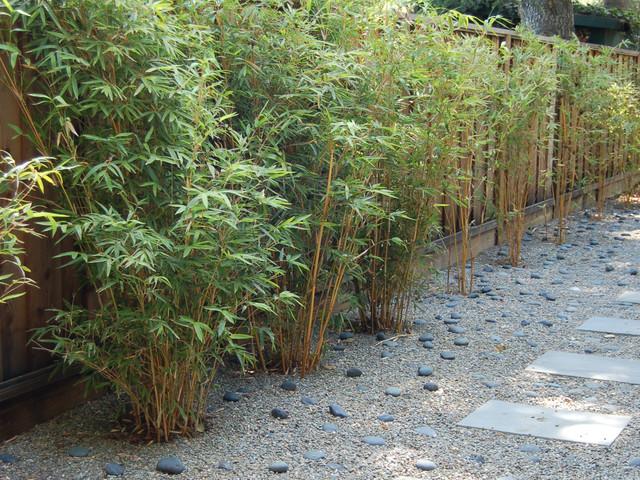 Great Design Plant Alphonse Karr Bamboo