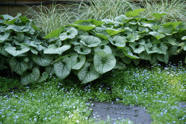 Hosta Alternatives For The Shaded Garden