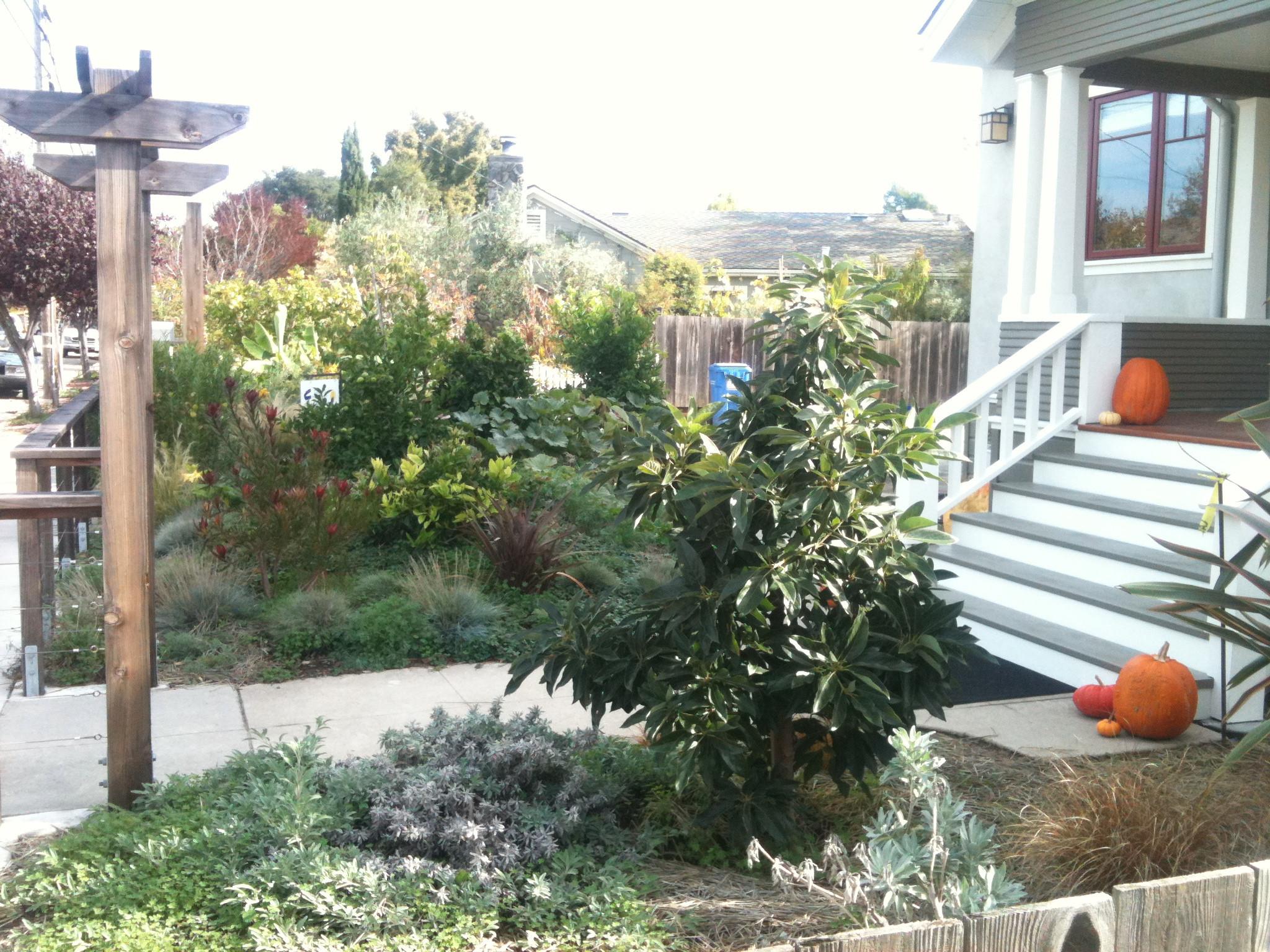 Avocado Tree Will Soon Shade the Front Porch