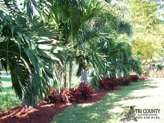 Back Yard Landscape - Tropical - Landscape - tampa - by Tri County Landscape Services