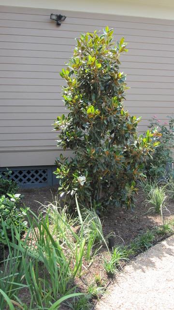 Backyard bird sanctuary - Traditional - Landscape ... on Birds Backyard Landscapes id=84252