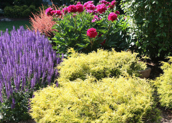 Backyard evergreen perennial garden design traditional for Landscape design perennial garden