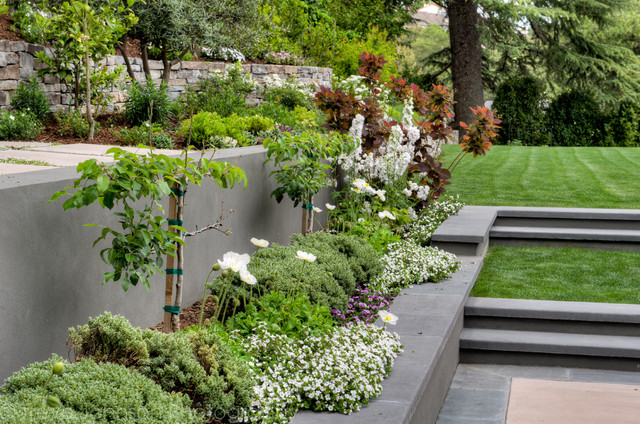 backyard garden contemporary landscape san francisco