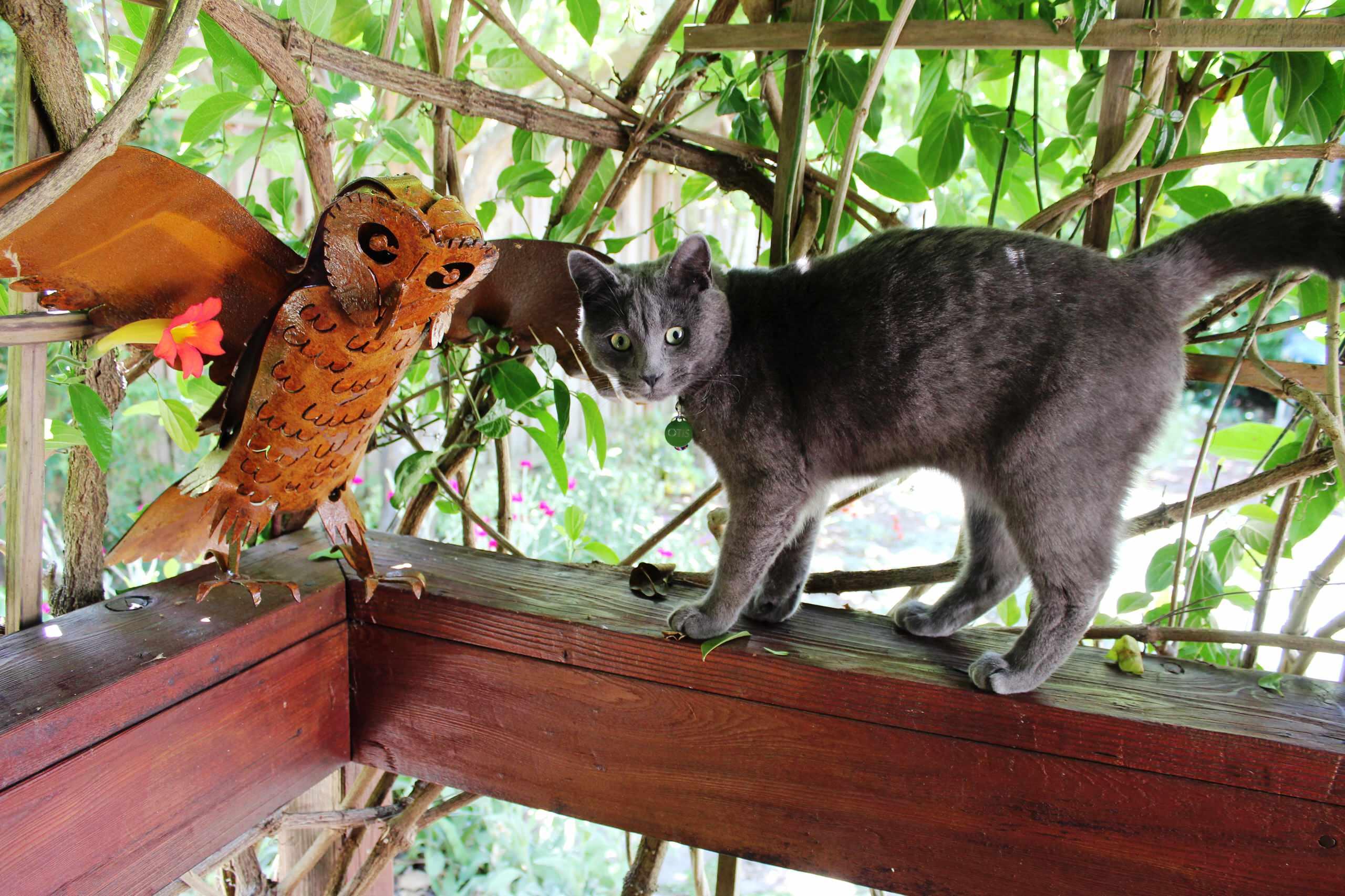Backyard Kid and Pet-Friendly