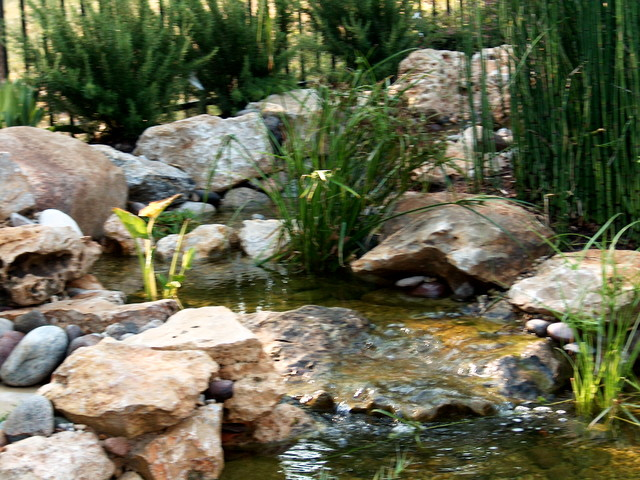 Backyard Landscapes with water features traditional-landscape