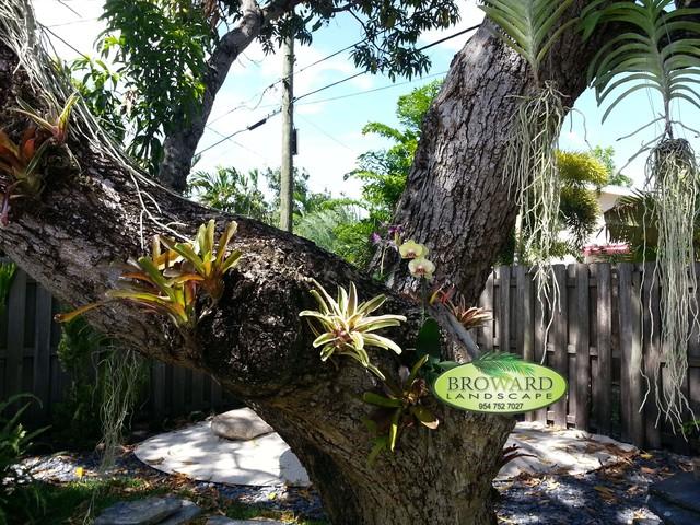 Backyard landscaping landscape miami by broward for Landscaping rocks broward county