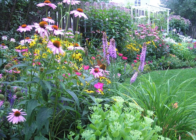 Annual Flowers And Perennials additionally Backyard Perennial Garden Traditional Landscape Chicago moreover Types Of Flowers To Plant Summer Flowers moreover Fence It together with Drought Tolerant Garden Spring 12 6. on daylily bed design