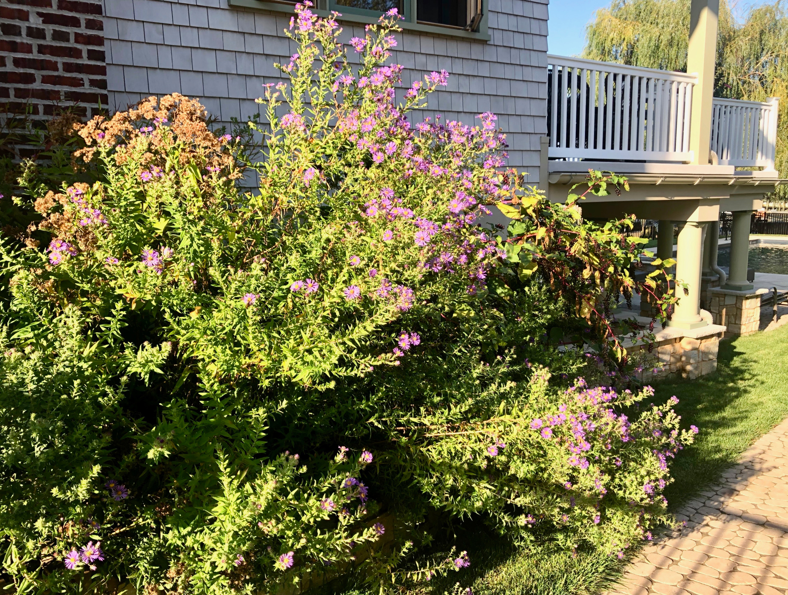 Beach House - Native New Jersey Plantings