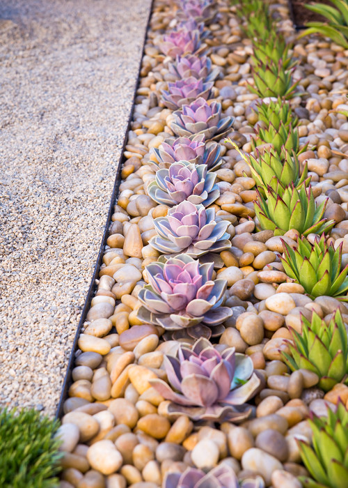 succulents in a row