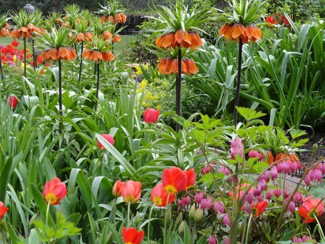 Beautiful zen spring garden traditional-landscape