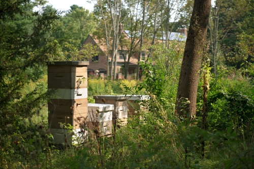 Here's another example of careful placement of apiaries. If you've got thick foliage in your yard, it could be the perfect opportunity for stealthy placement. The bees love flowering plants and greenery alike.