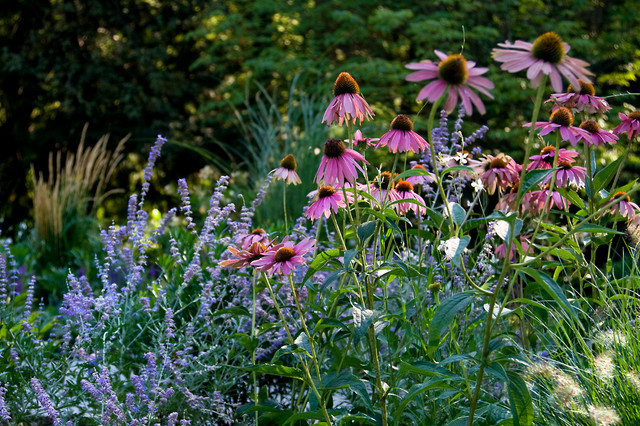 Your Summer Watering Guide to Keeping Plants Happy and Healthy