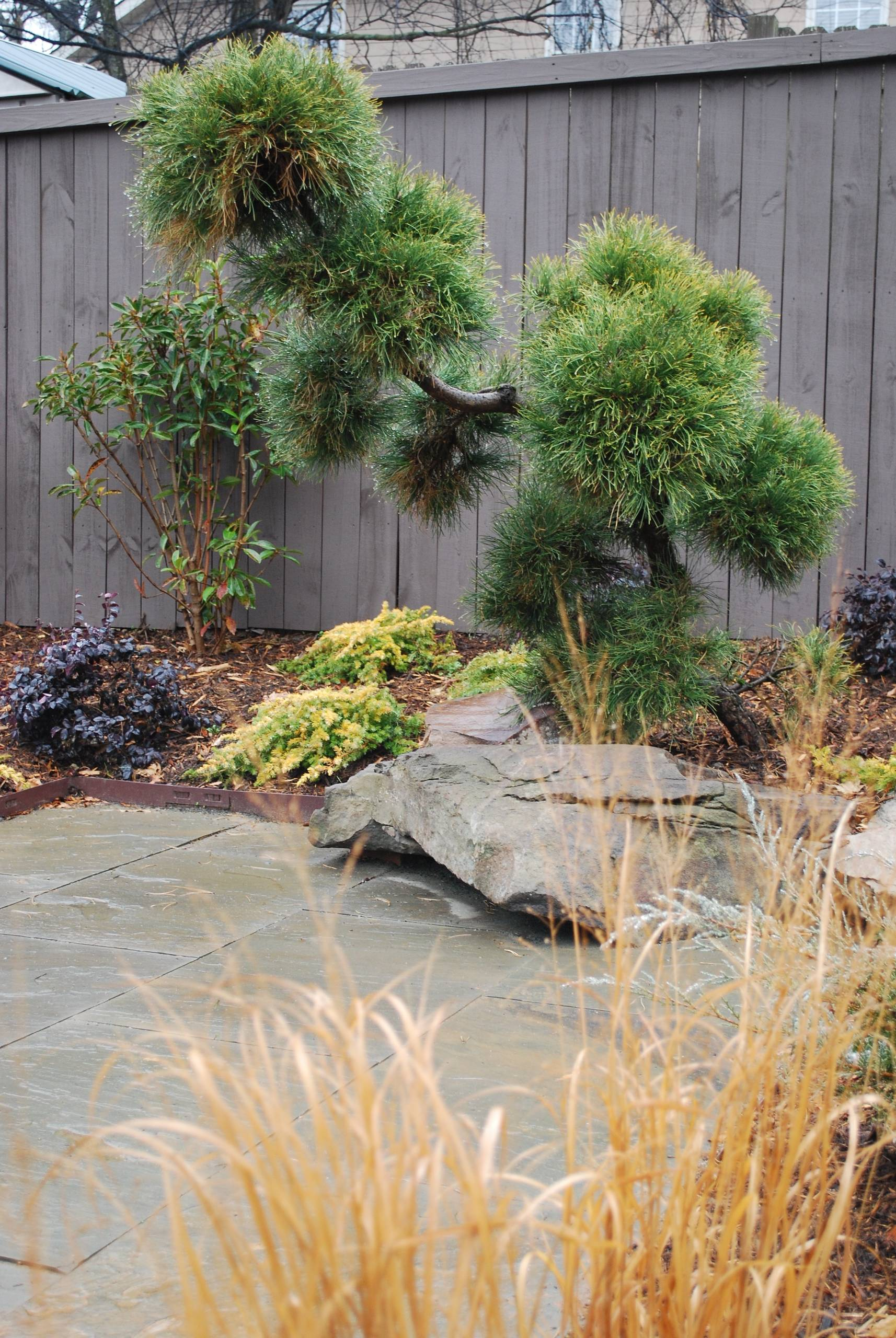 Black pine, boulders, patio and switchgrass.