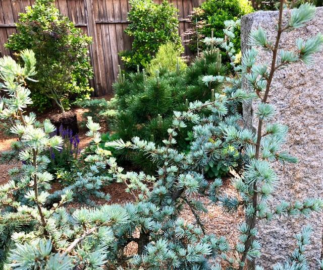 Blue Atlas Cedar and Stone Plinth. eclectic-landscape