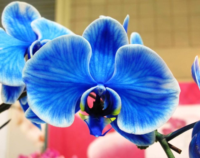 blueorchid.jpg tropical-landscape
