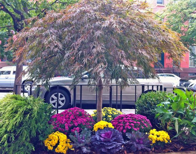 Brooklyn Nyc Townhouse Garden Design Sidewalk Fall Planter Contemporary Landscape New