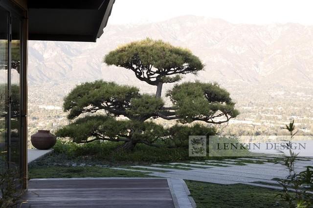 Bonsai Landscape Contemporary Landscape Los Angeles